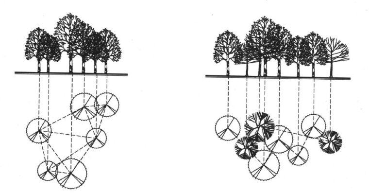 实用 景观植物设计方法(图文解析,值得收藏)_14