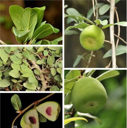 十八种藤本植物大集合~-024.jpg