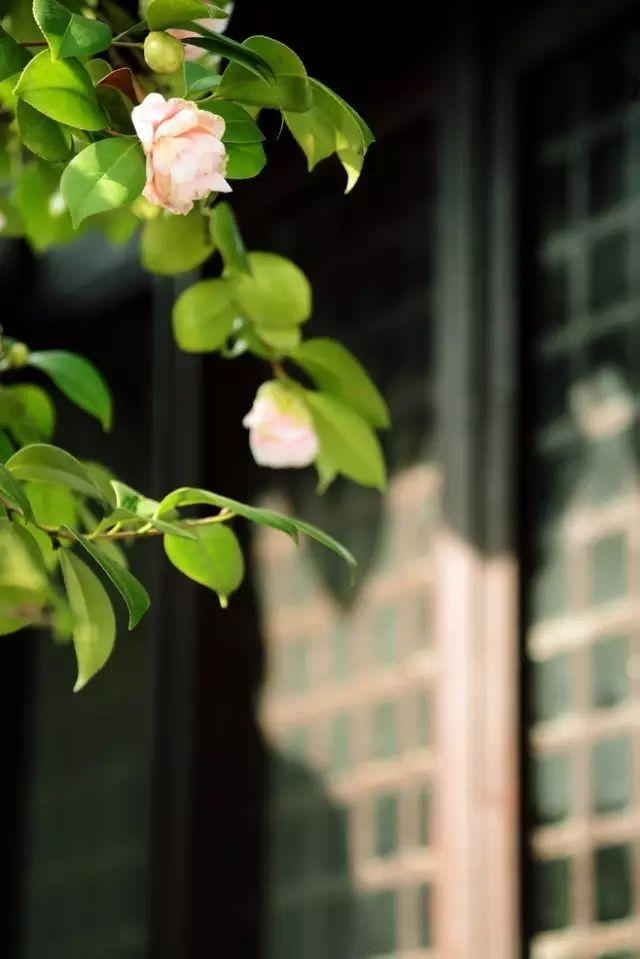 花窗之美,穿越千年而来_19