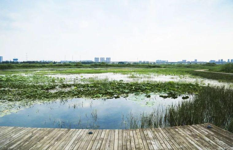 案例 渭柳湿地公园_16