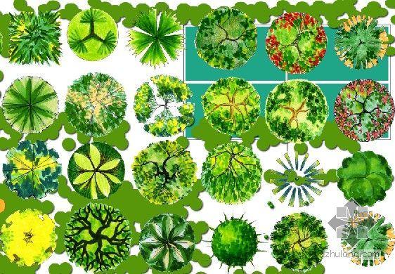 photoshop植物平面素材