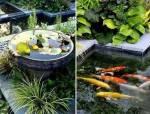 有了院子,一定造个池塘