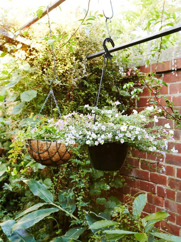 澳大利亚Fitzroy花园-6