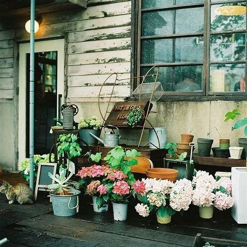 世界那么大,我却只想要个小院花开满园,自在从容……_23
