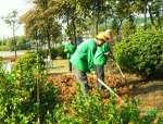 超实用|园林绿化苗木反季节栽植的方法