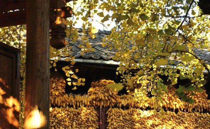 这才是中国人的院子,秋天美到骨子里_30