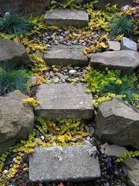 不起眼的小野花,也可以给你的花园带来惊喜_12