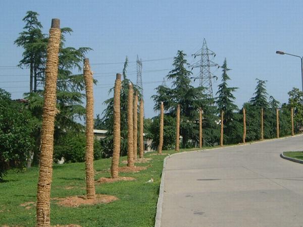 市政工程大树移栽施工过程(PPT总结66页)