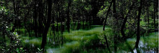 案例分享|新加坡双溪布洛湿地公园景观设计_10