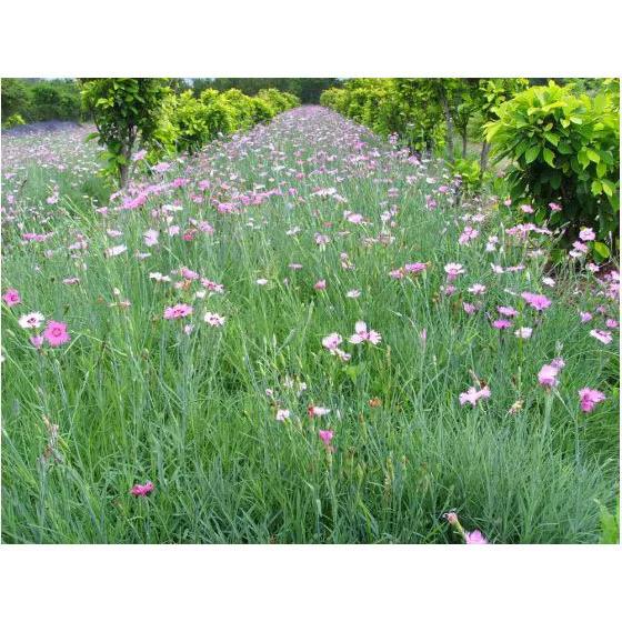 干货 景观地被植物的选择方式_3