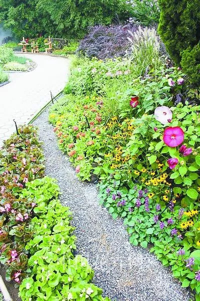 干货 景观地被植物的选择方式_8