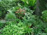 花境设计掌握这4要素,给庭院花园增色!