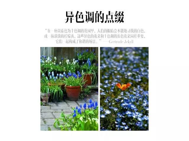 干货|庭院花园中的色彩搭配_3