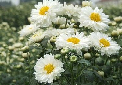香花植物-嗅觉盛宴_32