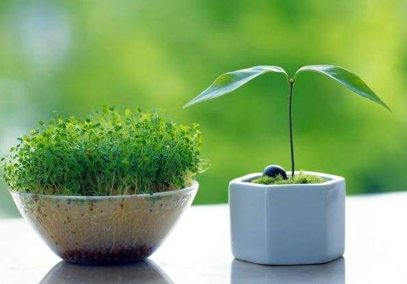 怎样利用花卉消除室内装修污染?