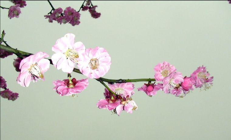 灵气之源·中式庭院主景树一览_6