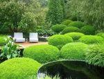 造型植物•球形灌木