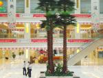 保鲜棕榈树能造就室内外精致美景