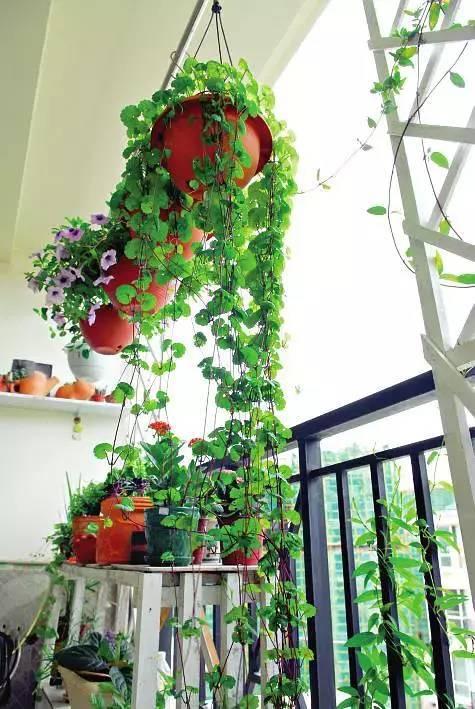 想要这样一个阳台,过小日子,看花开_12