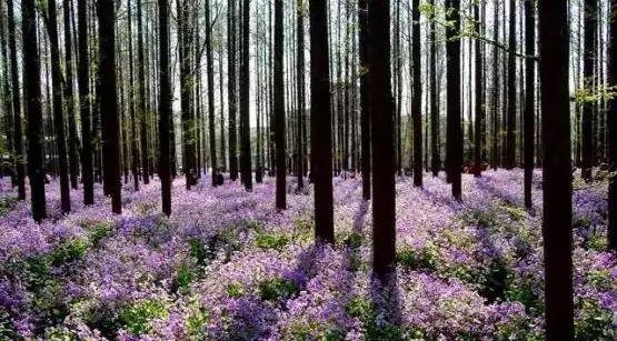 """这些必备的""""植物造景"""",不止是种树种花_4"""
