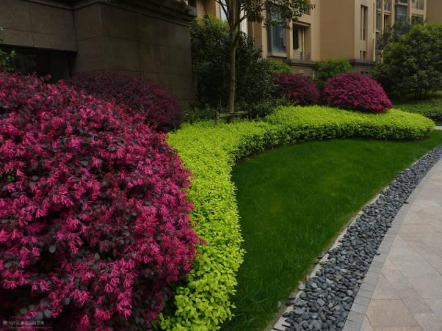 植物设计中花卉灌木植物色块的应用处理_6