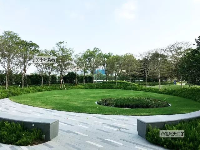 最详细图解:深圳湾三大豪宅景观植物配置!_31