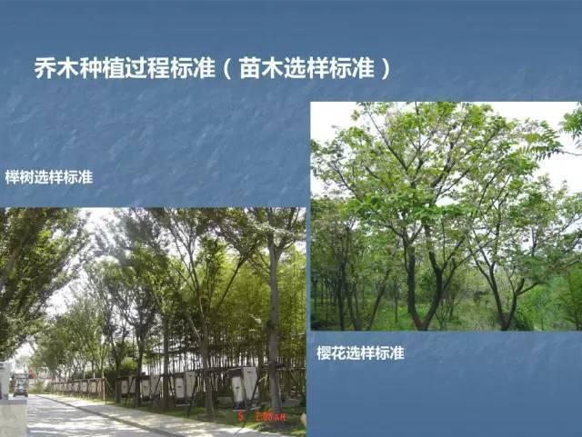 龙湖景观施工工艺标准效果(让你更懂现场)--软景篇_7