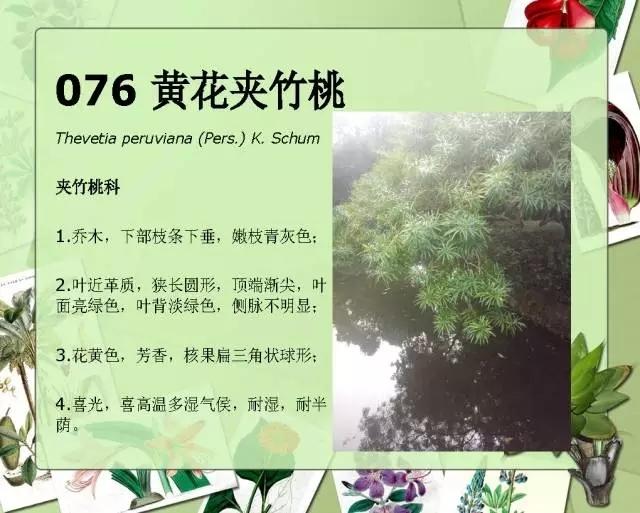 100种常见园林植物图鉴-20160523_183224_095.jpg