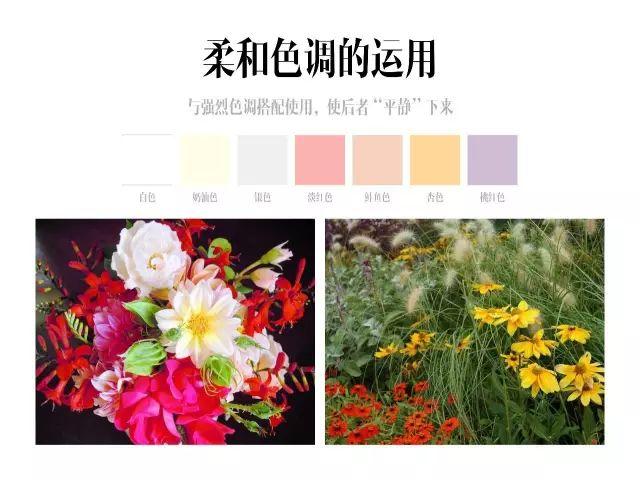 干货|庭院花园中的色彩搭配_17