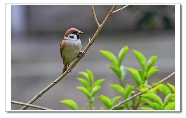 心随声动,聆听大自然不一样的声音!