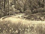 雨水花园 · 最美生态景观实力派
