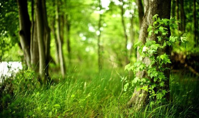 林下地被植物的应用及配置_4