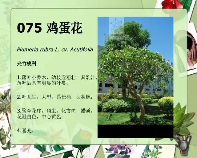 100种常见园林植物图鉴-20160523_183224_094.jpg
