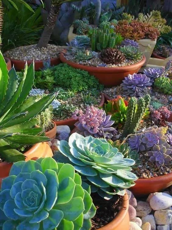 种满多肉的后院,原来比花园还美!_25