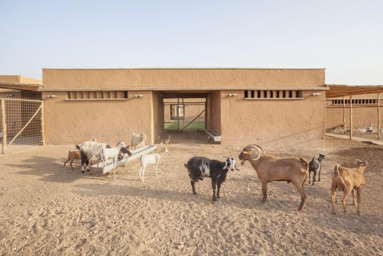 伊拉克动物辅助疗养中心-2