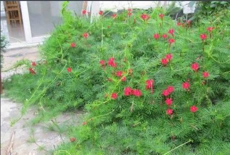 十八种藤本植物大集合~-027.jpg