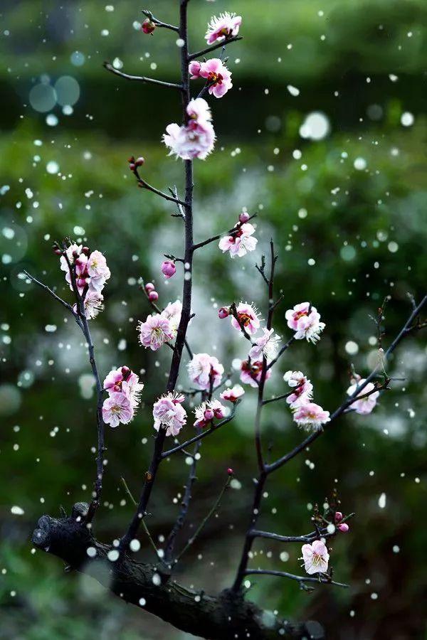 暗香疏影,踏雪寻梅,太美了!_8