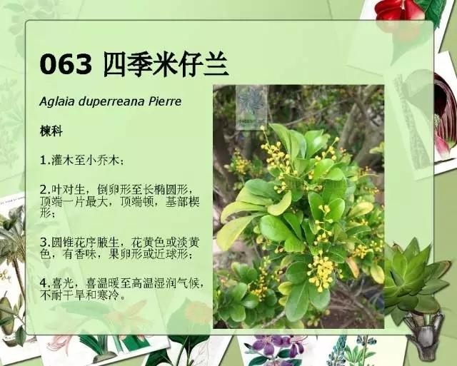 100种常见园林植物图鉴-20160523_183224_070.jpg