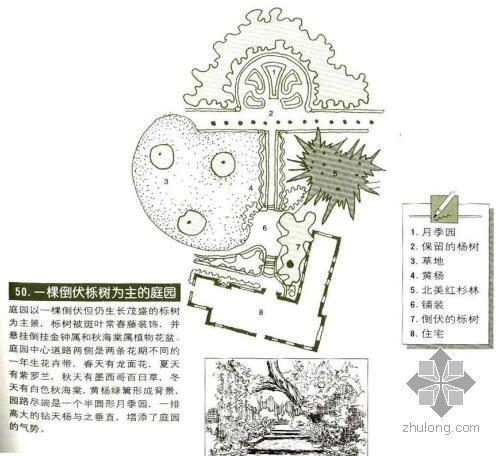 一棵倒伏树为主的庭院景观设计图
