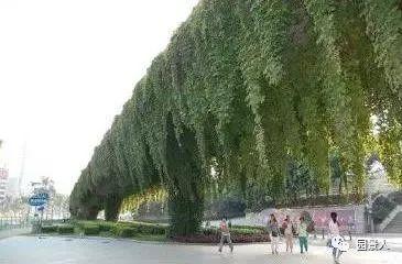 垂直绿化·会呼吸的墙壁_10