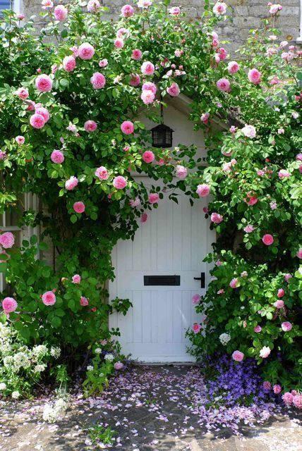 想要一个小院子,花开花落一辈子_10