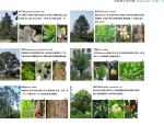 安道-宇东维萨居住区景观规划设计