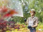 浇水学三年,苗木浇水的学问大着呢!