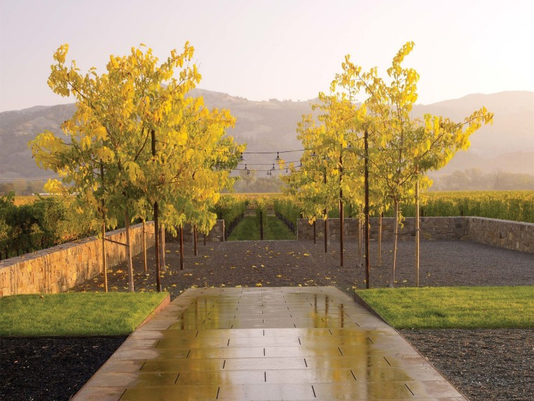 简洁质朴的葡萄园景观
