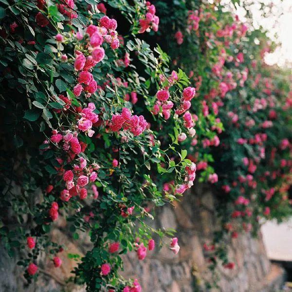 世界那么大,我却只想要个小院花开满园,自在从容……_1