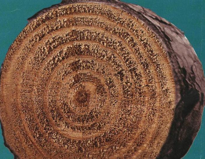 木结构(PPT,59页)