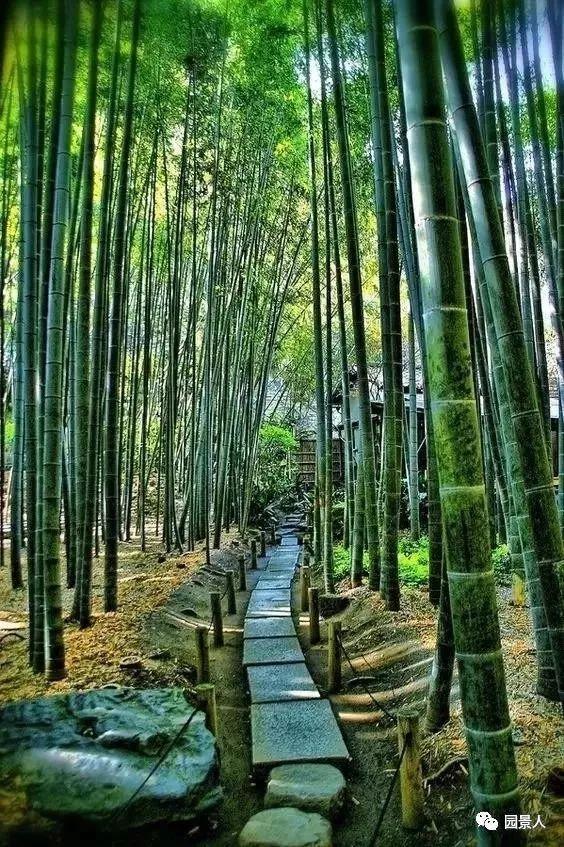 竹 · 景