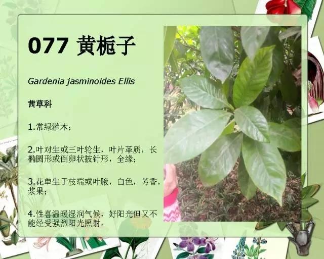 100种常见园林植物图鉴-20160523_183224_097.jpg