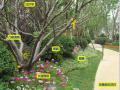 景观植物|150张植物配置解析