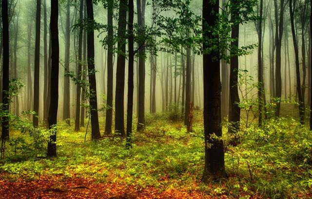 林下地被植物的应用及配置_3
